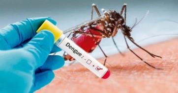 Aumenta o risco de epidemia de dengue durante o verão