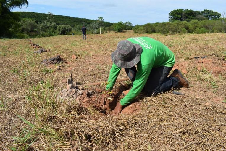 Prefeitura está realizando o plantio de mais de 40 mil árvores nativas